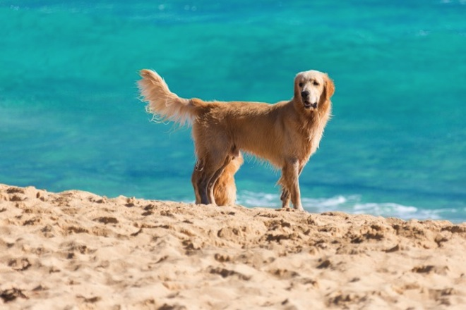 Pampering Your Dog at the Beach